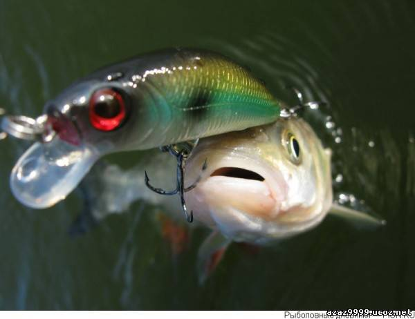 можно ли ловить на озере кравцово